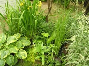 Bagienko dla roślin błotnychi bagiennych